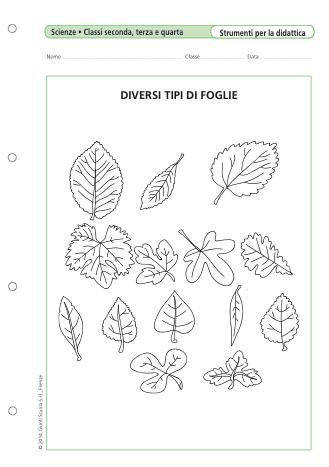 Diversi tipi di foglie la vita scolastica - Diversi tipi di musica ...