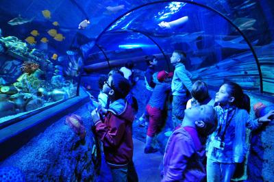 Gardaland SEA LIFE Aquarium 3-1