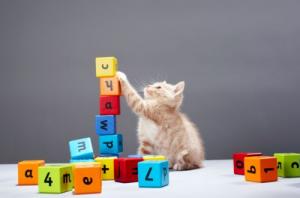 Quale Lingua Parlano Gli Animali