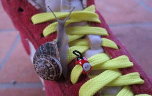 Scarpe e movimento