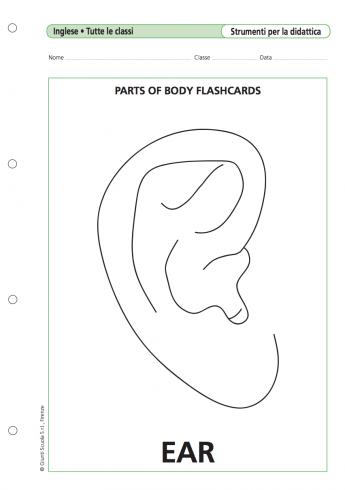Parts Of Body Flashcards La Vita Scolastica