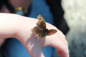 farfalla scienza bambini mano
