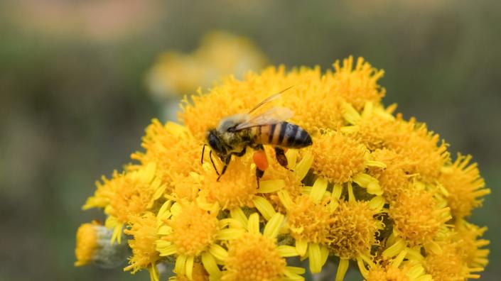 ape fiore fecondazione