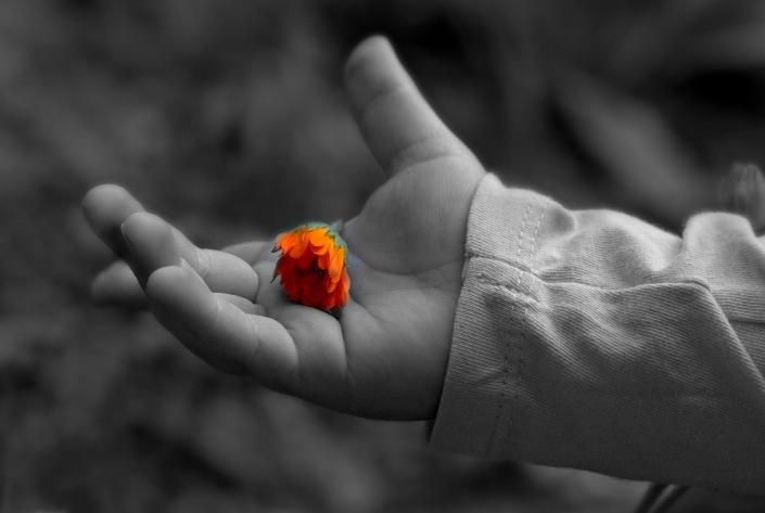 bambino mano fiori gentilezza