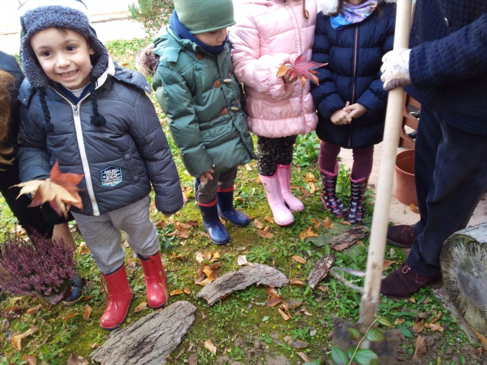 scuola Tassina albero 3