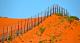 I muri australiani contro cani e gatti... (Parte I)