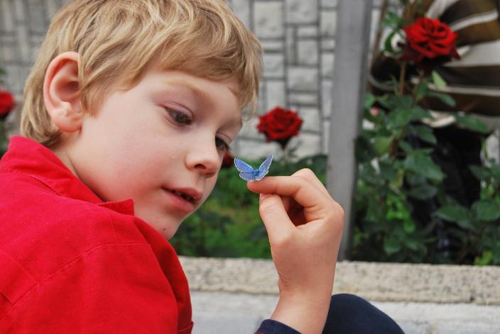 farfalla bambino natura