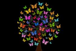 butterflies-2713343_1280