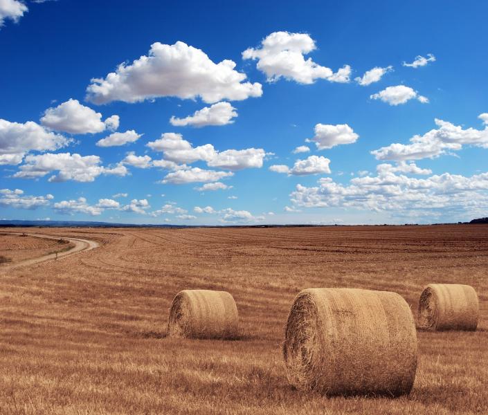 estate campi grano
