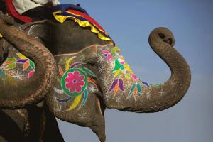 elefante_dipinto5.jpeg